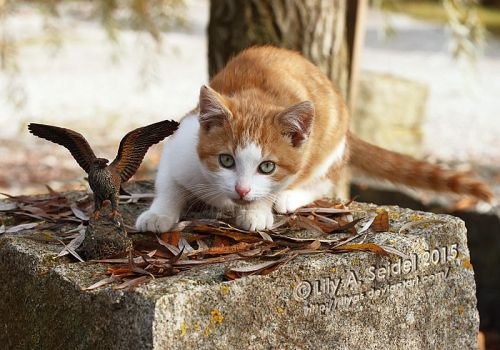 Ginger Kitty by Lilyas