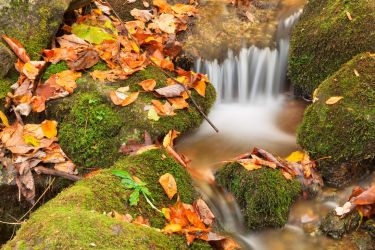 Wigwam Autumn Moss Stream by somadjinn