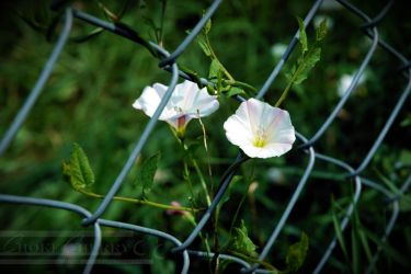 Chained to You 2 by choke-cherry