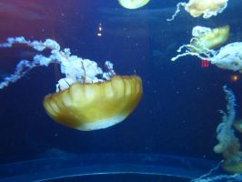 Jelly Fish 2 by emerald0888-stock