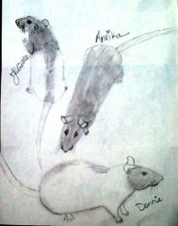 Rat sketches by pogovina