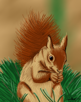 205 - Squirrel by Shasel