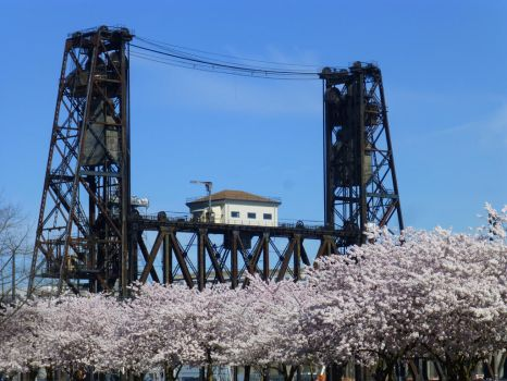 Steel and Cherry Blossoms by Vincestigator