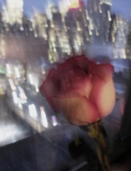 The Blurry Rose by Adeville