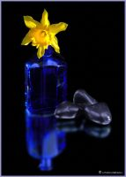 Daffodil 509 by hfpierson