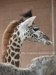 Young Giraffe 2 by BCAnime