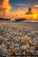 Seashell-Sunrise-from-Beach-in-Florida by CaptainKimo