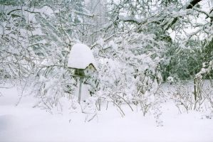 Snow Storm 2008 - Stock 3 by Carol-Moore