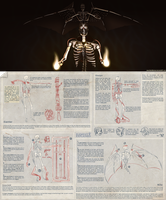 Element Explained: Skeleton Variants by MarikBentusi