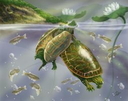 Painted Turtles by bonbon3272