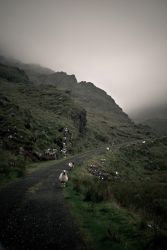 irish landscape with sheep by t3hr