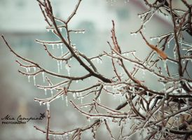 Covered in ice 36-365 by shantaycinnamon