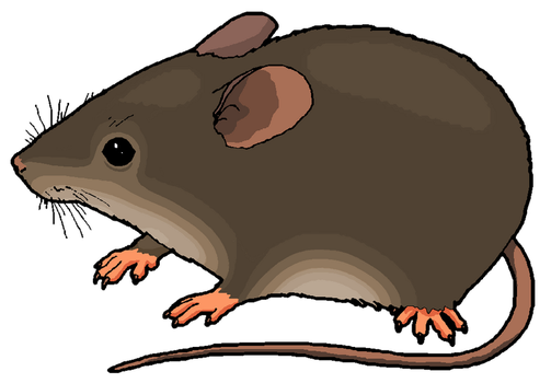 Mouse Clipart by MisterBug