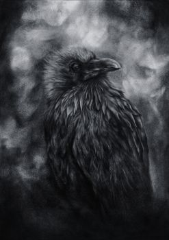Raven of dispersion by SRudy