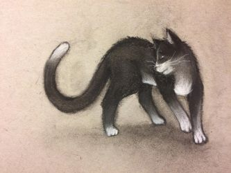 Tuxie by InsomniaDoodles