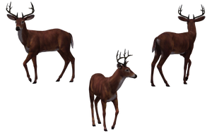 Deer - Buck 02 by Free-Stock-By-Wayne