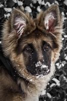 Snow puppy! by Mystical-Nomad