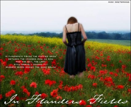 In Flanders Fields by miss-mastermind