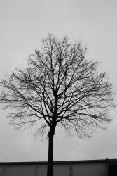 Another Lonely Tree by crazykira