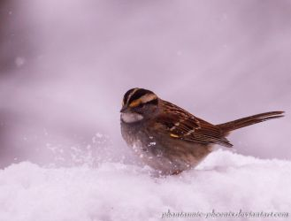 White-throated Sparrow in the Snow by Phantasmic-Phoenix