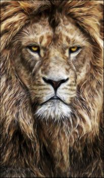 Eye to eye with the lion by AStoKo