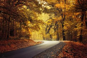 Autumn Journey XXI. by realityDream