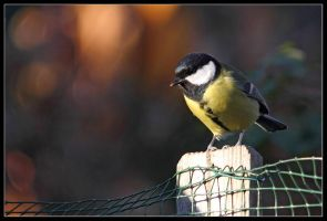 great tit 4 by 21711