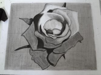 A rose in progress by Daiminion