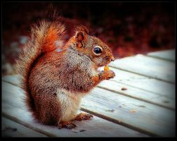 Young Squirrel by surrealistic-gloom