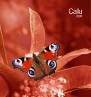 Natural Red by Callu