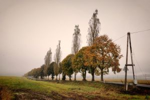 Memories of autumn II by tomsumartin