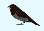Chocolate Self Society Finch Icon by Icearstorm