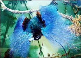 Birds Of Paradise Gradients by f--l--A--r--k