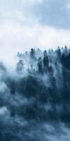 Cloudy forest - custom box background by Martith