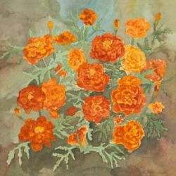 Red And Gold Marigolds by carolthompson