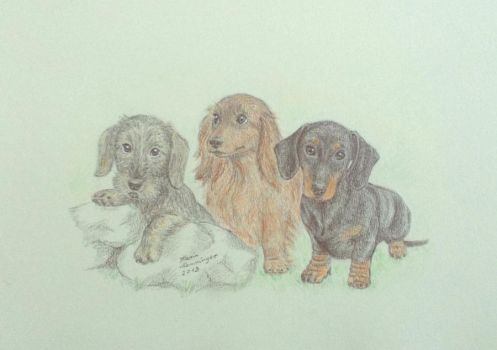 Dachshund puppies by KarinM