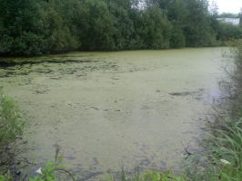 swamp by diabolicalll-stock