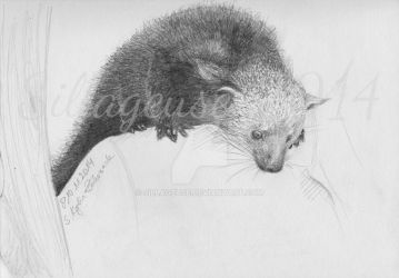 Binturong pencil drawing by Sillageuse