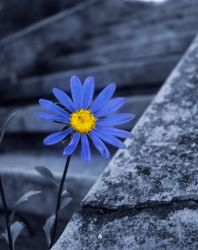 I feel blue... by AnaDeviant