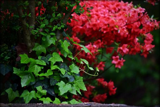 Ivy And Azalea by OurTime6to9