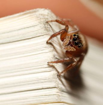 Jumping Spider 10 by bleu3t