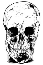 The Colonial Skull by carbonism
