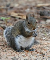 Over fed Squirrel by Tailgun2009