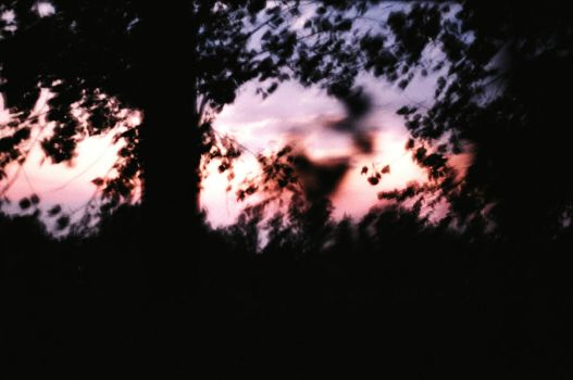 Trees Sky Sunset -Blurry- by Medalin