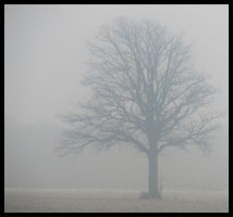 Another lonely tree by Roland3791