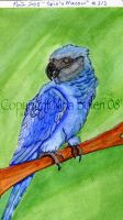 Spix's Macaw Watercolor I by The-GoblinQueen