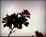 Pretty Bush Flowers by surrealistic-gloom