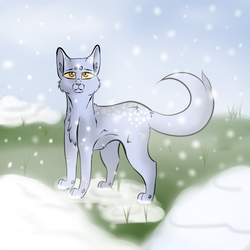 Victor - Warrior Cats OC by P0is0NR4iN