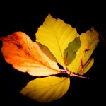 The sign of autumn by peregrin71