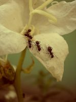 Ants are busy now by erlebnis
